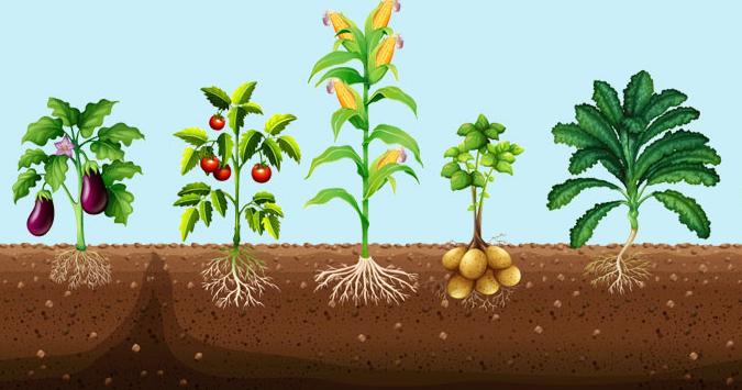 BioGrow - купить