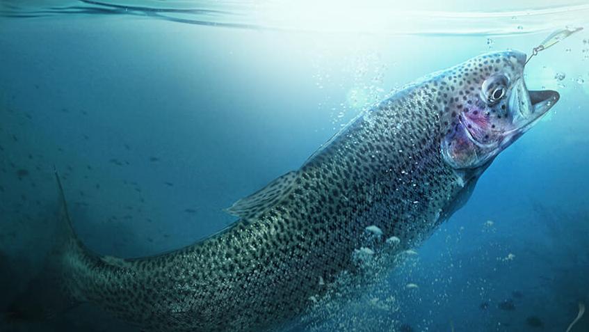 Fish XXL – где купить – заказать – официальный сайт – производитель – оригинал